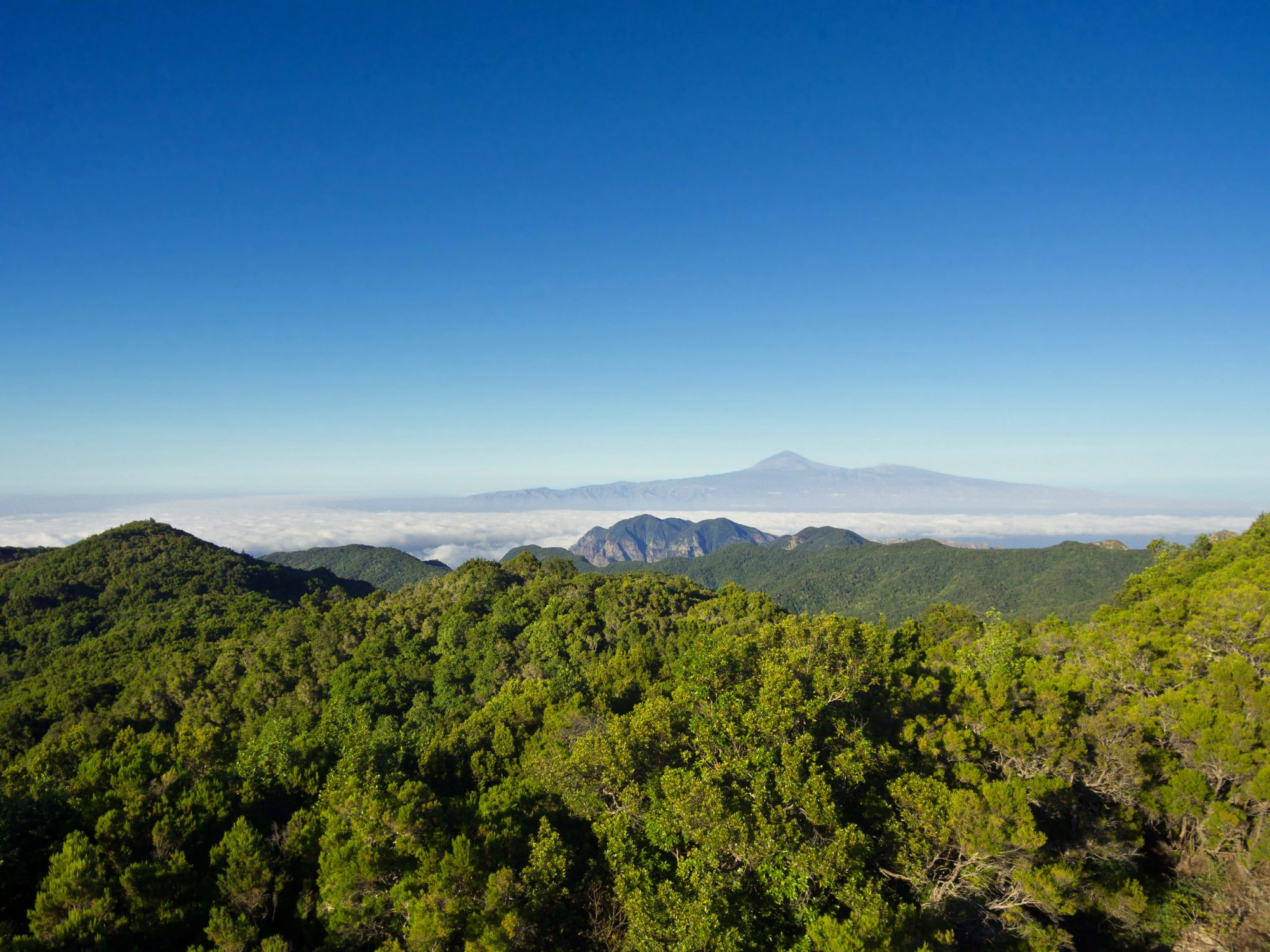 Canarias, Patrimonio de la Humanidad