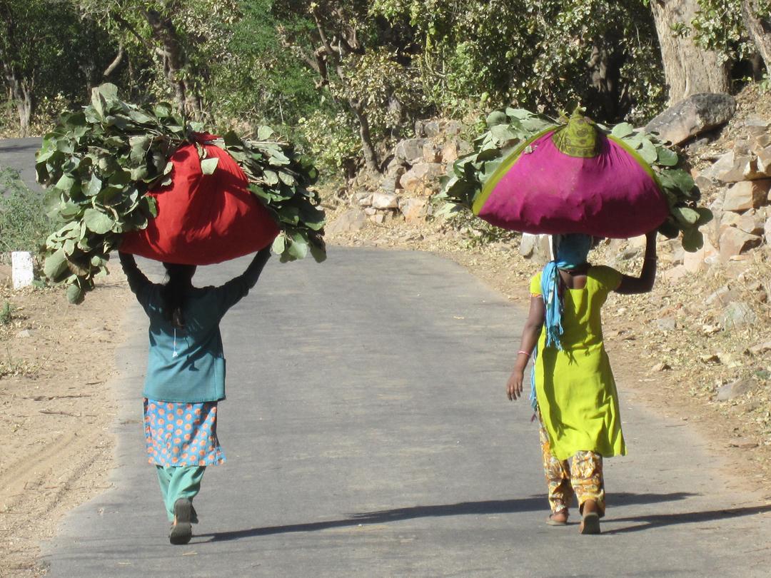 Gujarat. La tierra de Ghandi