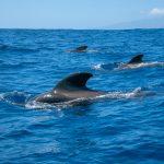 Deportes en el mar de las Islas Canarias